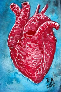 Human Heart Watercolor