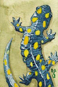 "Watercolor Salamander 2x3"" Illustration"